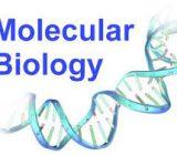 REALTIME PCR VÀ HƯỚNG ĐI CHO CÁC PHÒNG XÉT NGHIỆM VI SINH
